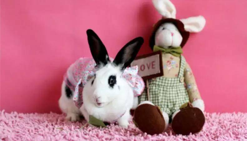 兔子聪明吗