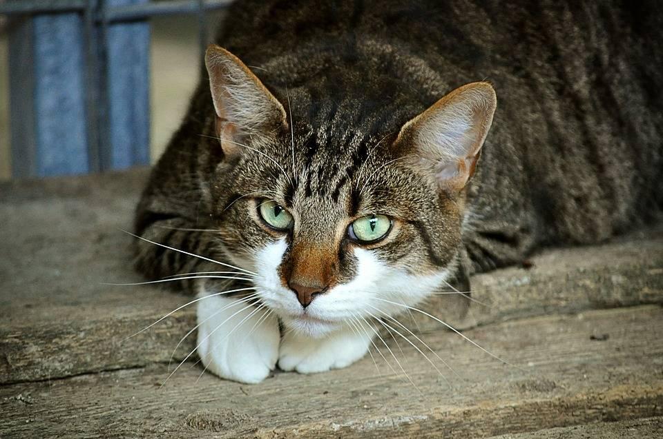 猫的眼睛看出了伤感