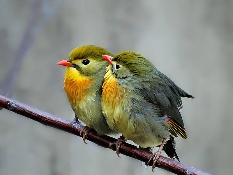 冬季养鸟更不能掉以轻心