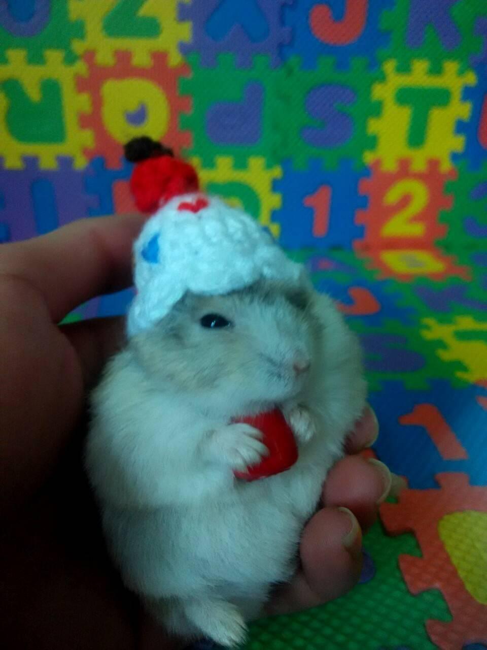 生日都过完了,生日帽子才到货,不过,它戴上也挺可爱的
