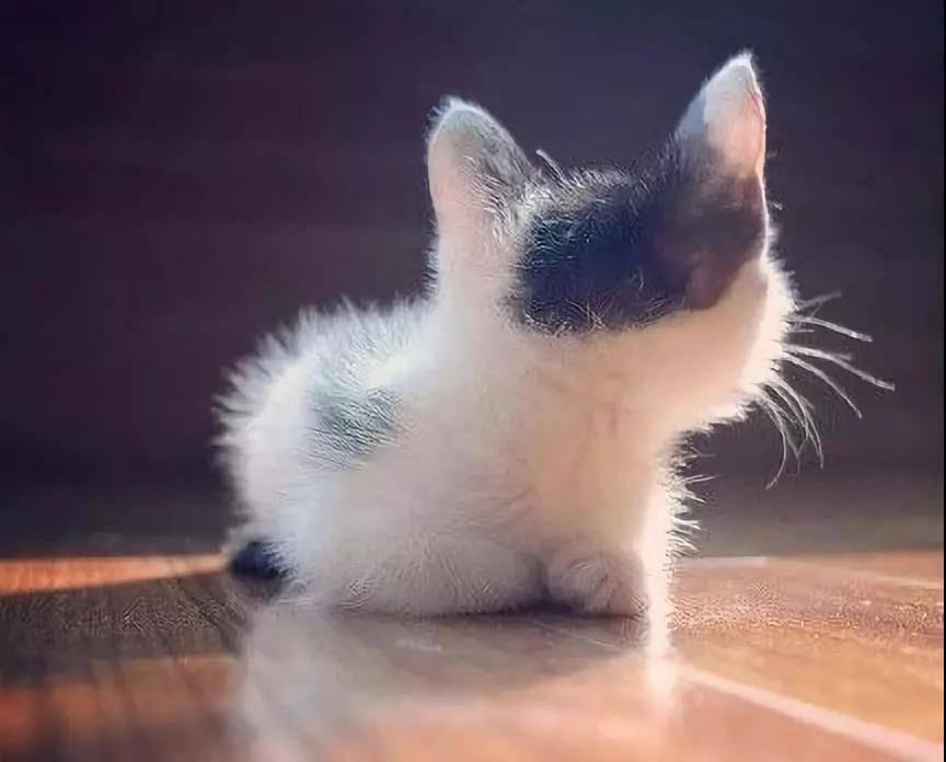 来几张小猫咪的背影杀图片,值的收藏哦