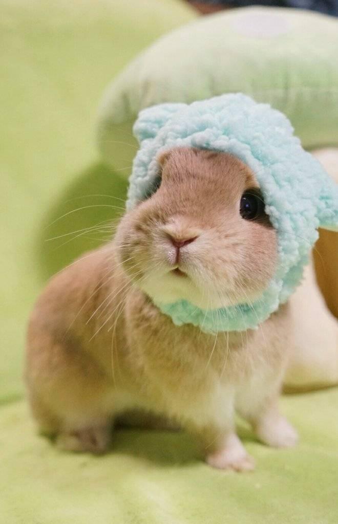 兔子壁纸头像可爱萌