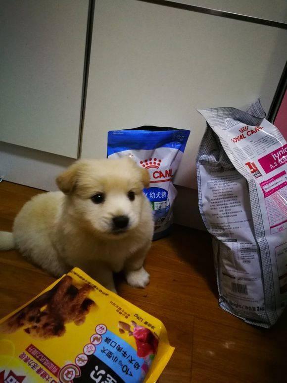 有谁知道这是什么狗啊,感觉被骗了的感觉,买的时候说是金毛。