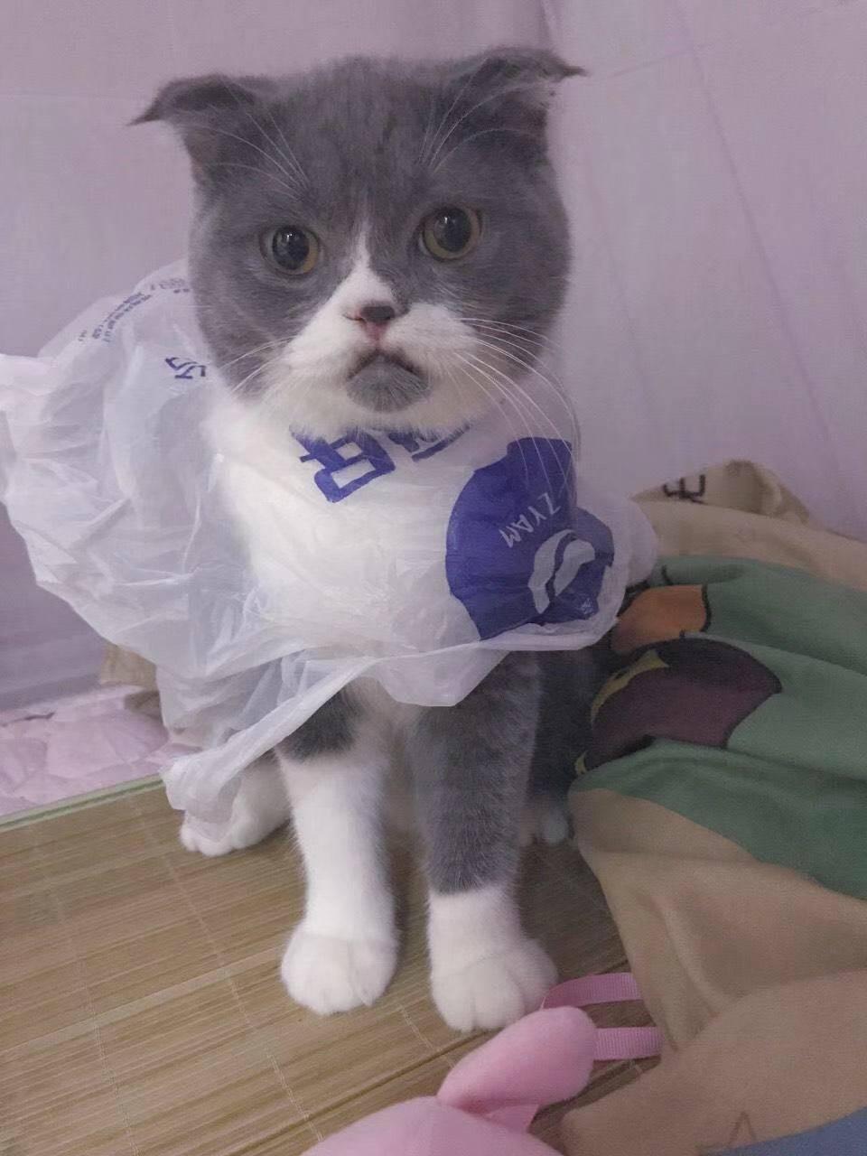 猫界时尚大使