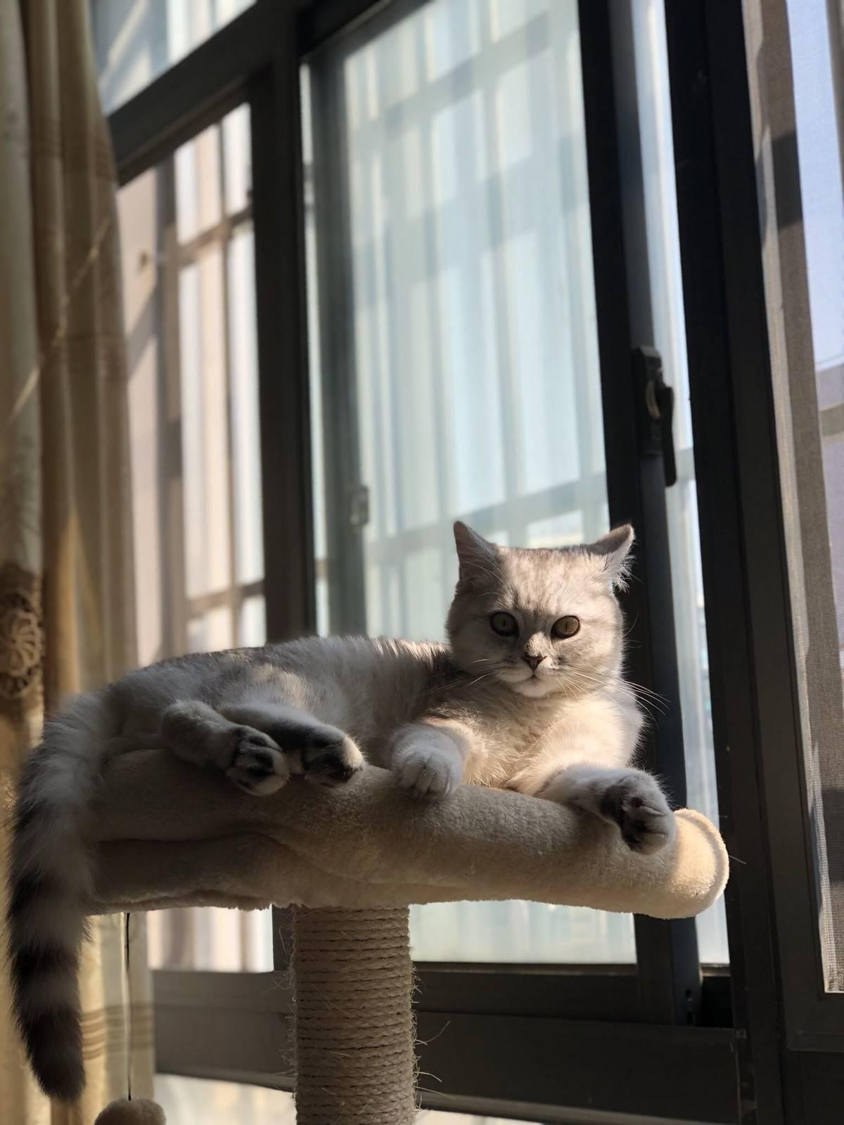 猫,晒太阳
