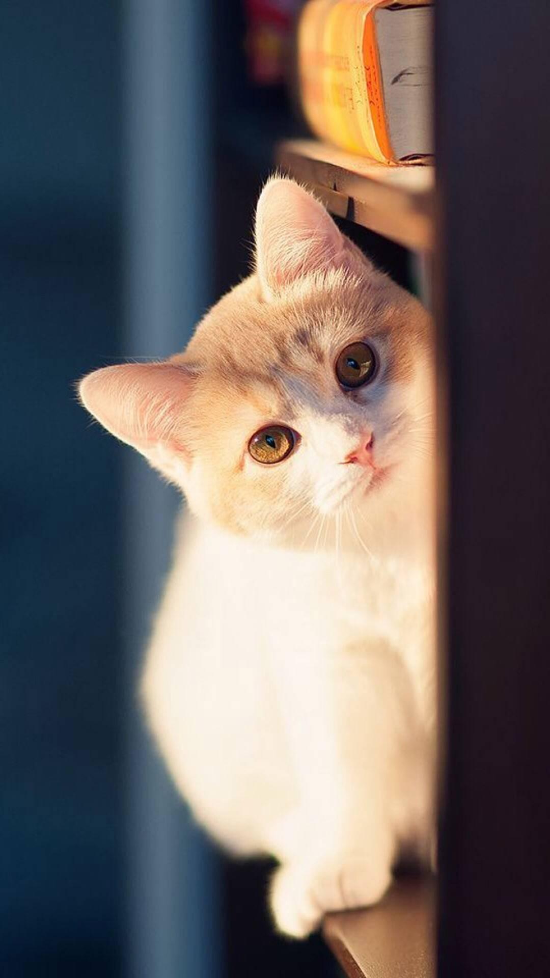 猫咪 喵星人 萌宠 动物 可爱