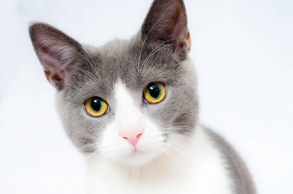 毛茸茸的猫