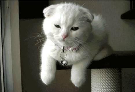 猫咪向你眨眼睛是在撩你吗