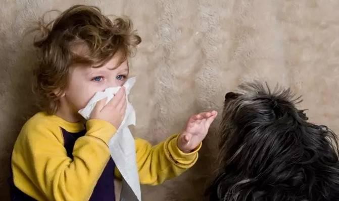 宠物过敏,对宠物猫狗毛过敏怎么办?