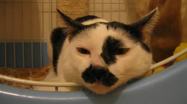 猫的鼻子干怎么回事