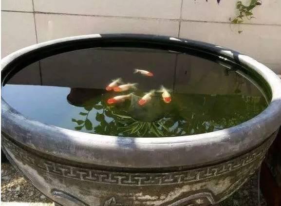 古法养金鱼最常见的八个姿势