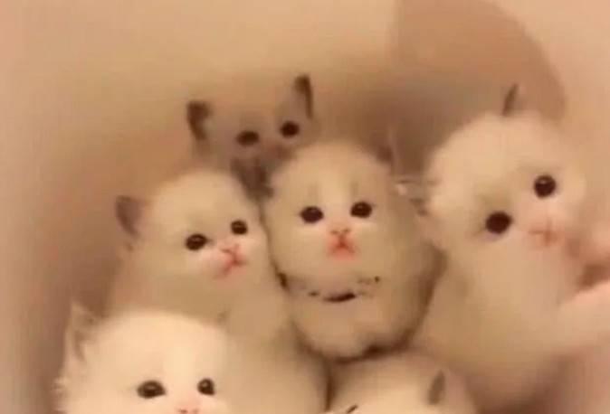 """母猫把小奶猫都藏在""""全家桶"""",生怕主人发现,女主看到笑弯了腰"""