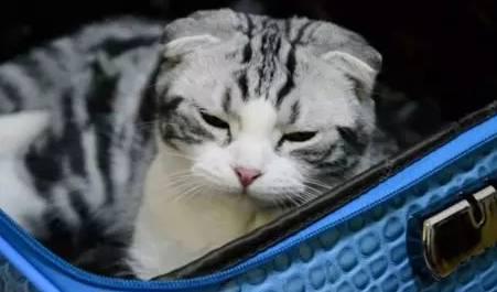 猫咪的8种睡姿代表了什么含义