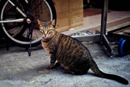 你了解你家猫咪的性格吗?进来测试一下吧
