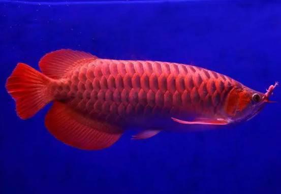 夏天养观赏鱼,不做好这三点,鱼儿们可能就危险了!