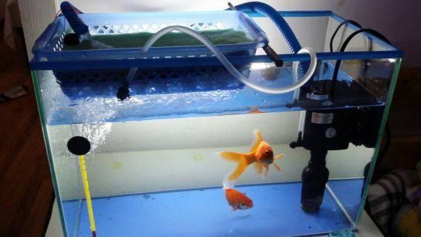 效果最好鱼缸过滤器图
