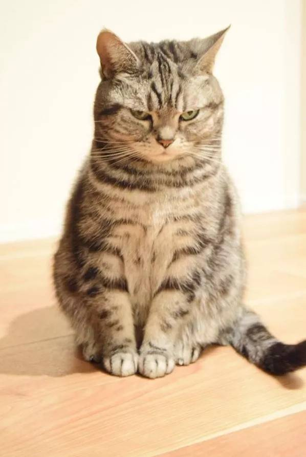 铲屎官天天被家里猫大爷用眼神质问:为什么上厕所不用猫砂?!