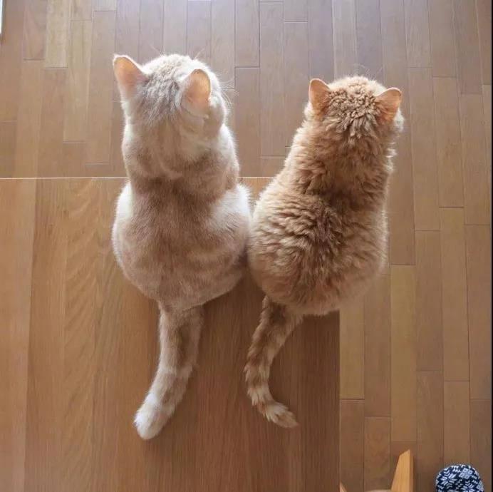 这么萌的小猫图片你见过吗?小猫PP对着你就像香酥软糯,入口即化。