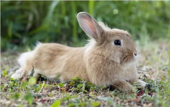 医生让我们备孕期间不要养猫狗兔子,我该遵医嘱吗?