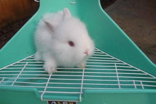 给兔子清洗耳朵的注意事项
