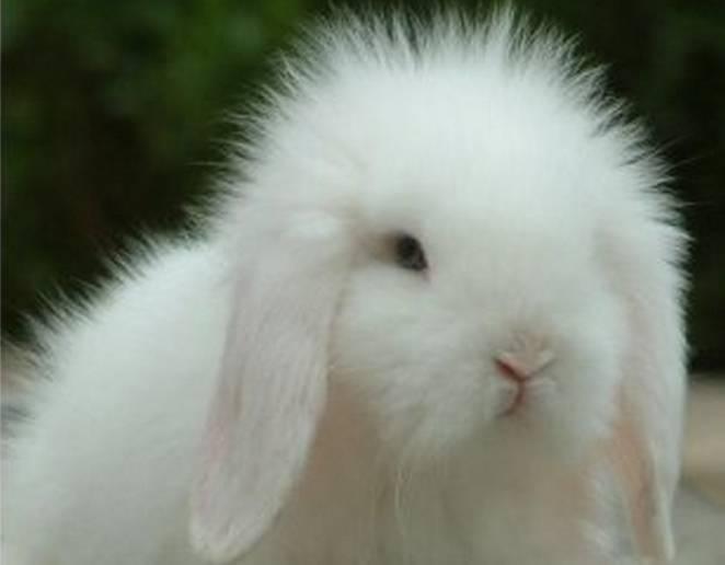 兔子流眼泪是怎么回事