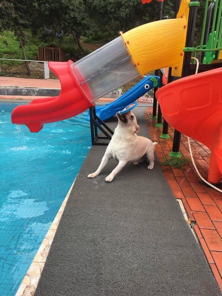 狗狗就喜欢别人的玩具