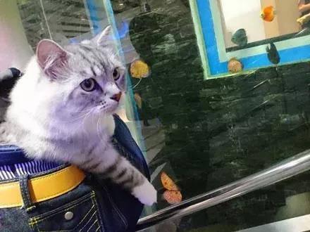 网友带着猫逛水族馆时,猫咪的表情瞬间就亮了...  这个应该好吃!那个看上去也不错啊!
