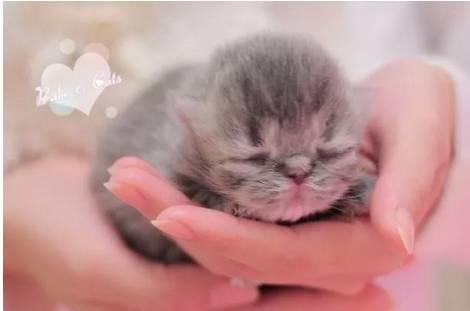 刚出生的小猫怎么养