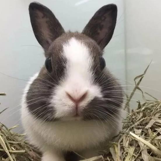 兔子有胡须吗,兔子的胡须可以剪吗?
