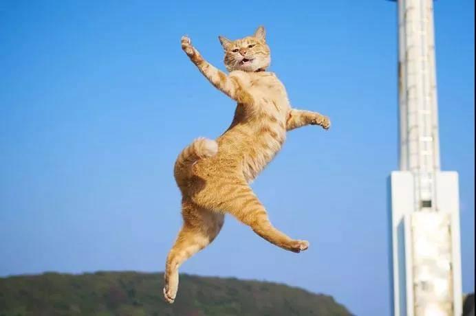 逗猫棒就像一把神奇的钥匙,总能帮你解锁猫咪的新舞姿……