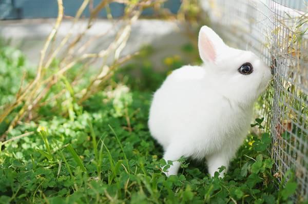 兔子突然变得有攻击性是怎么了?