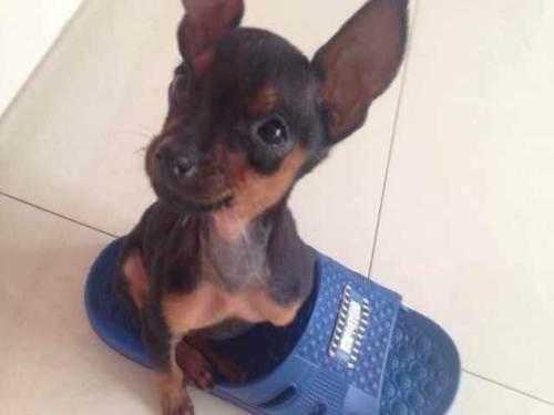 狗狗呕吐(拉稀)是怎么回事,呕吐腹泻幼犬健康的头条问题!