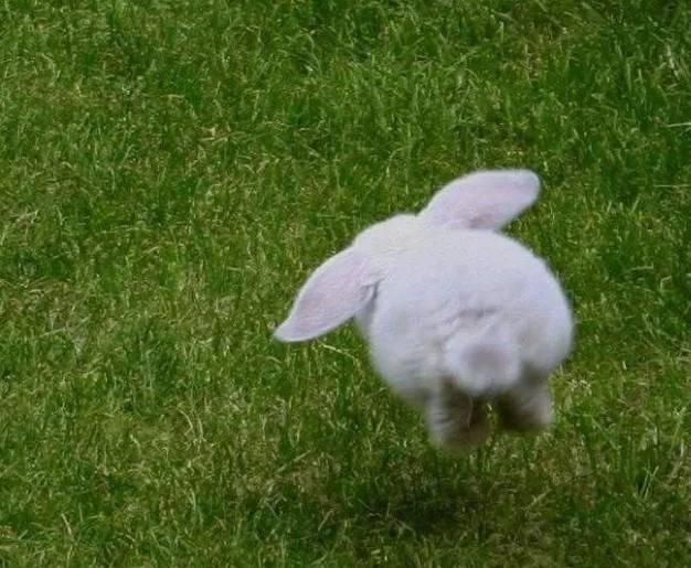 可以摸兔子尾巴吗?