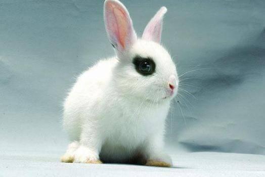 兔子衰老的特征有哪些