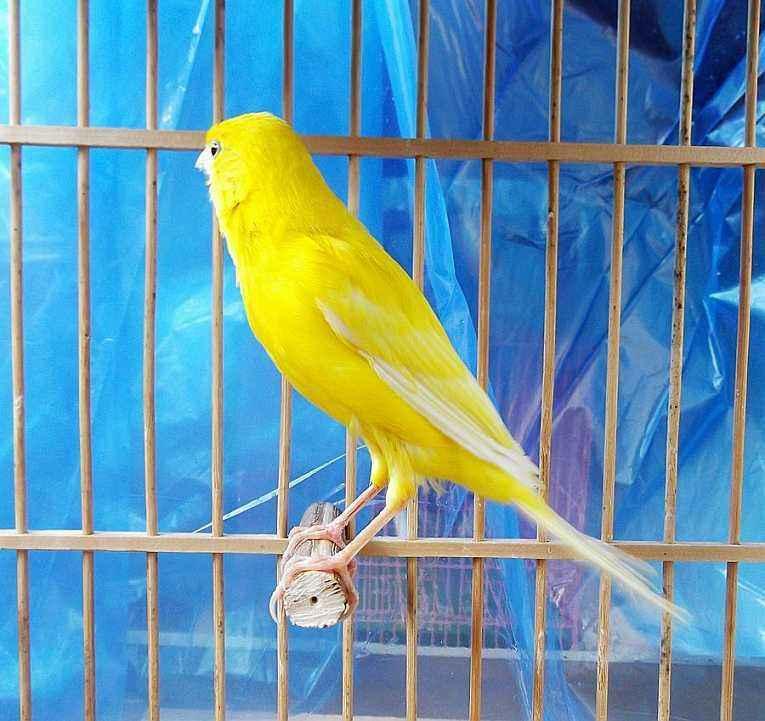 芙蓉鸟怎么养?冬季饲养芙蓉鸟的关键事项