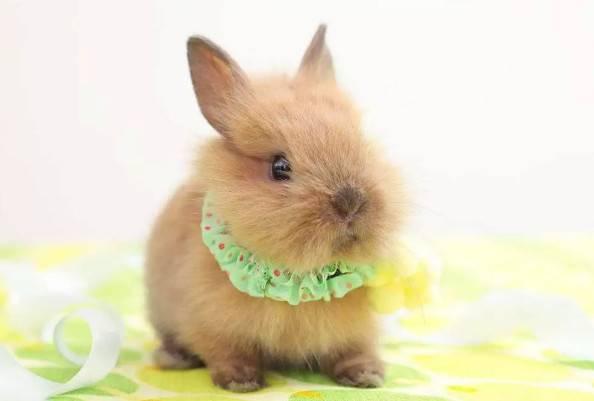 兔兔为什么会撞笼子?