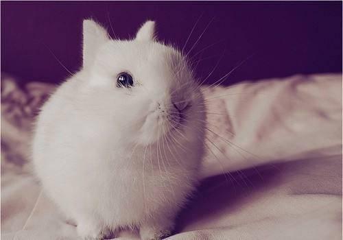 兔子一天喂几次