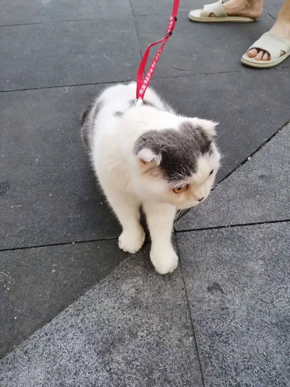 这肥猫不知吃了多少老鼠居然那么肥😱