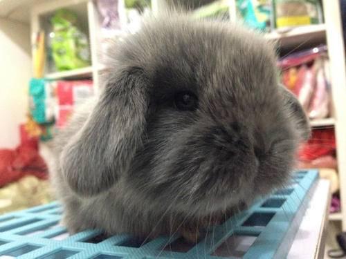 节假日养兔子要注意些什么