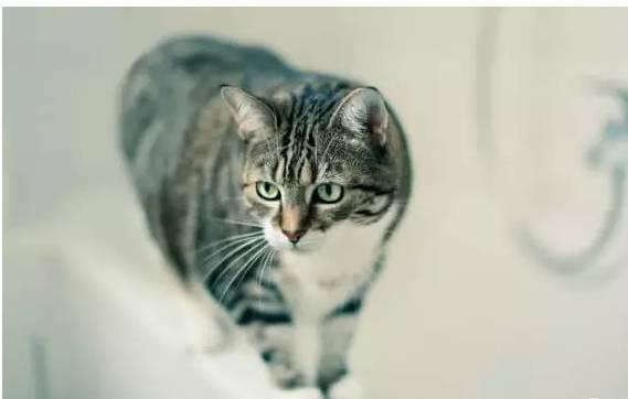 猫咪洗澡,为什么它还不高兴