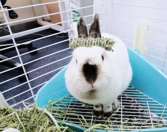 你对兔兔那么好,它究竟知不知道?