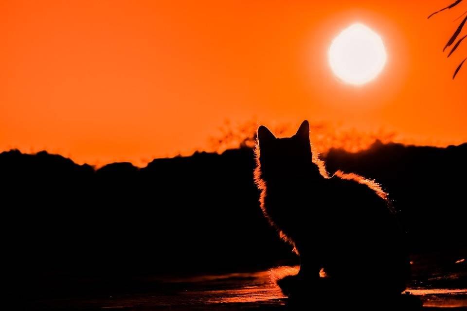 日落中的猫