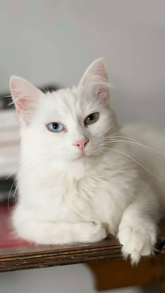 手机壁纸:萌宠小猫咪图片壁纸