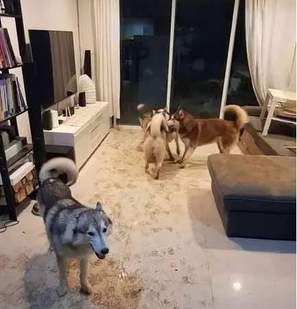 把狗狗寄养在朋友家,会发生什么事?