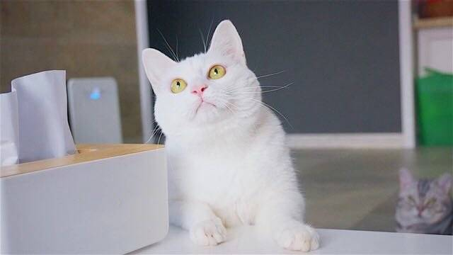 我是中华田园猫 我为自己代言 我觉得我是最美的 小区一枝花 呵呵呵呵