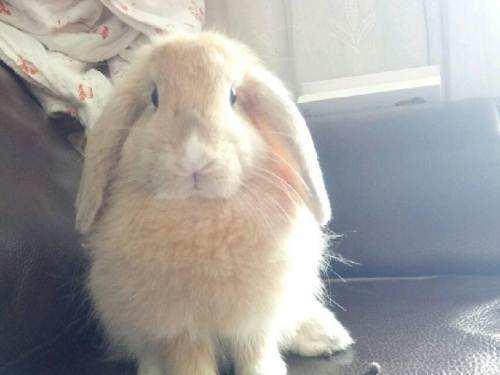兔子可以喝果汁吗?兔子不爱喝水怎么办