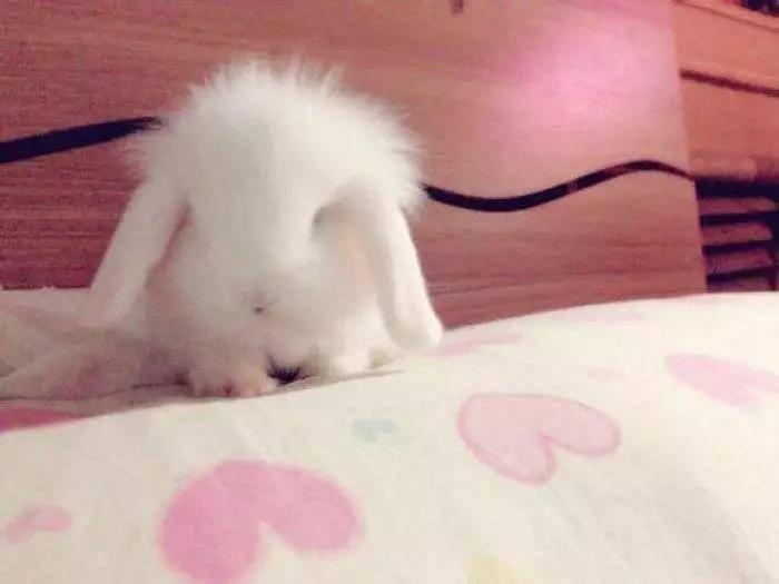 兔子为什么喜欢跑到床上尿尿?