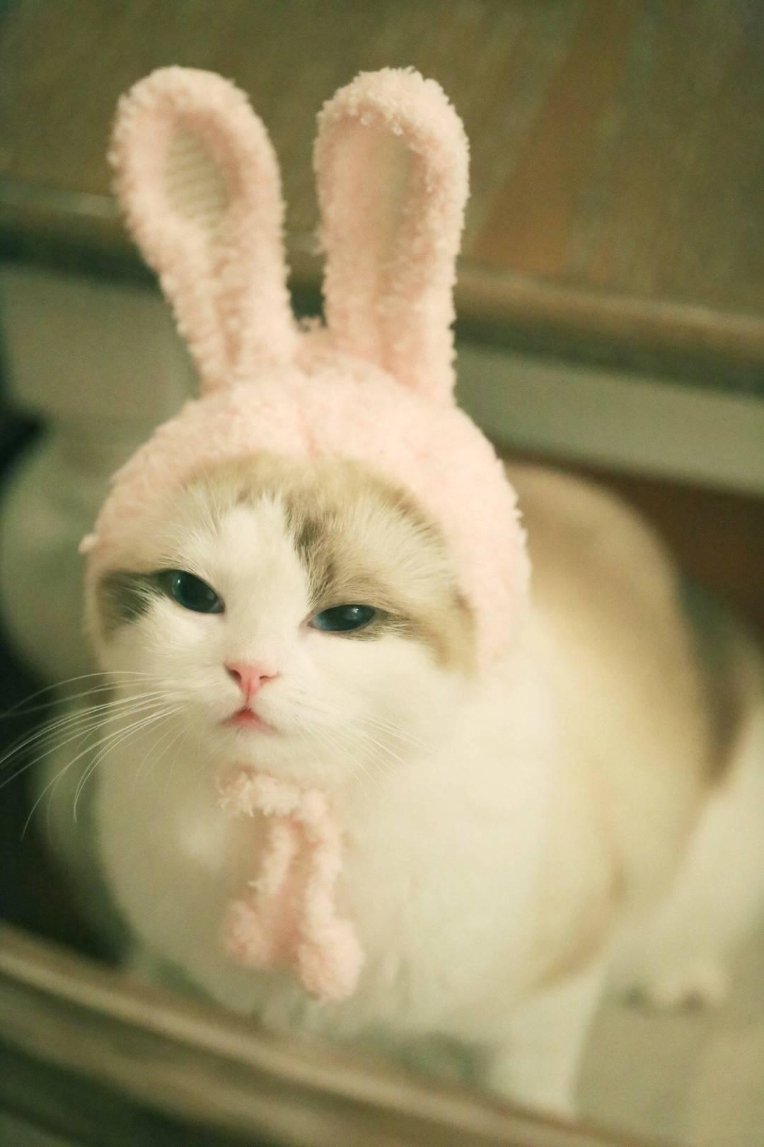 馒头~~喵星人 猫猫