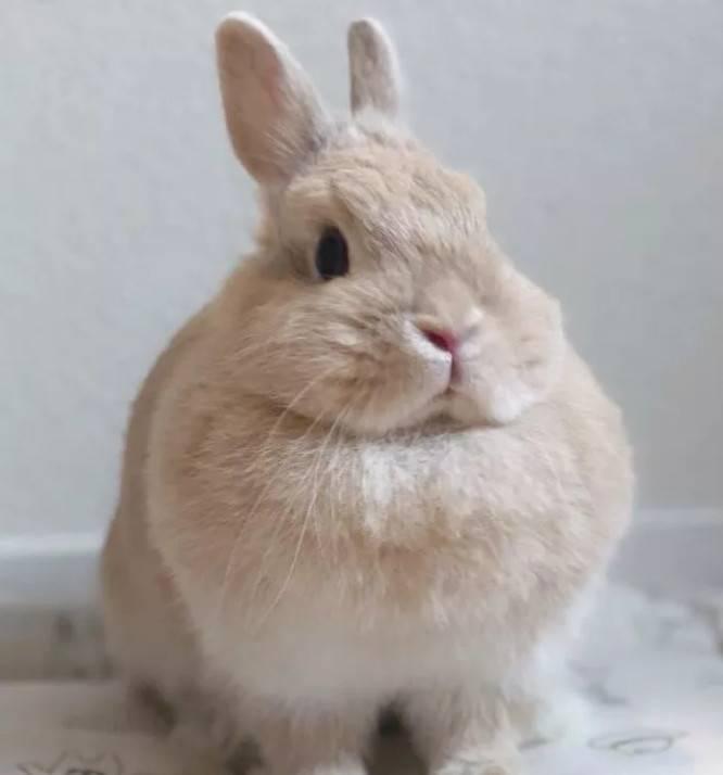 兔兔为什么要绝育?