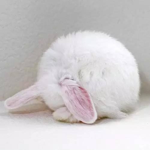刚买的小兔子怎么养